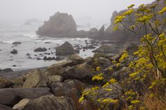 Красивые виды на дороге Mattole потерянного побережья сценарной в Калифорнии Стоковые Фотографии RF