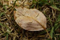 Красивые винтажные лист в осени Стоковое Фото