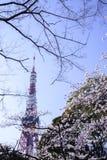 Красивые вишневые цвета Сакуры в токио, Японии стоковые изображения rf