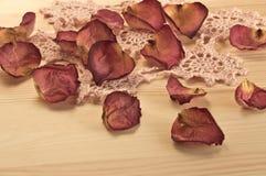Красивые высушенные лепестки розы Стоковая Фотография RF