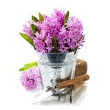 Красивые гиацинты и садовые инструменты стоковое изображение