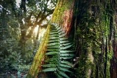 Красивые гималайские горы стоковое изображение