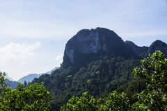 Красивые гора и лес Стоковые Изображения RF