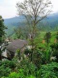 Красивые гористые поля чая на eliya nuwara, Шри-Ланка стоковые фотографии rf