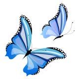 Красивые голубые бабочки, изолированные на белизне бесплатная иллюстрация