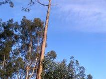 Красивые дерево и небо стоковая фотография rf