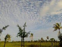 Красивые деревья и небо вечера Стоковые Фото