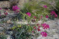 Красивые деревья и цветки Стоковое Фото