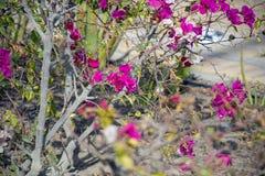 Красивые деревья и цветки Стоковое фото RF