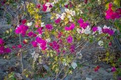 Красивые деревья и цветки Стоковые Изображения RF