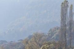 Красивые деревья нагие листва на том основании спрятанные они пути Стоковое Изображение RF