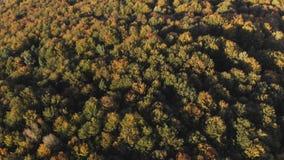 Красивые деревья осени в желтом, оранжевом и красном лесе на солнечный день осени видеоматериал