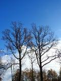 Красивые деревья осени, Литва Стоковые Изображения