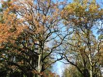 Красивые деревья осени, Литва Стоковая Фотография RF