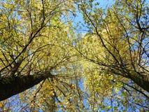 Красивые деревья осени, Литва Стоковое Изображение RF