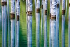 Красивые деревья поднимают над water's отделывают поверхность от дна озера Стоковые Изображения RF