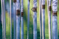 Красивые деревья поднимают над water's отделывают поверхность от дна озера Стоковое Изображение RF