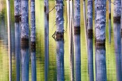 Красивые деревья поднимают над water's отделывают поверхность от дна озера Стоковая Фотография