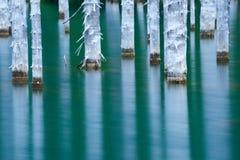 Красивые деревья поднимают над water's отделывают поверхность от дна озера Стоковое Фото