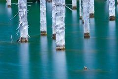 Красивые деревья поднимают над water's отделывают поверхность от дна озера Стоковая Фотография RF