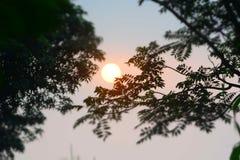 Красивые деревья темноты захода солнца Стоковое Изображение RF