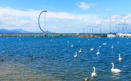 Красивые лебеди на озере Leman и части порта Ouchi Стоковые Фотографии RF
