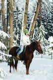 Красивые девушка и лошадь в зиме стоковые изображения rf