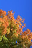 Красивые дерево и небо Стоковое Фото