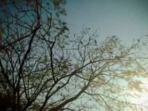Красивые деревья зеленые и предпосылка голубого неба Стоковое Фото