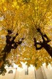Красивые деревья липы в падении Стоковые Фото