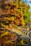 Красивые деревья и озеро осени в парке Sempione, милане Стоковые Изображения RF