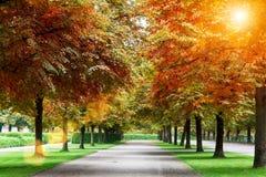 Красивые деревья осени в парке с солнцем flare Свежая задняя часть природы Стоковое Изображение