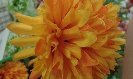 Красивые деревья цветков Стоковые Фотографии RF