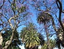 Красивые деревья Южной Америки древесина песни природы влюбленности grouse одичалая Стоковое Изображение RF