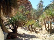 Красивые деревья en утесов на юге  Туниса Стоковая Фотография