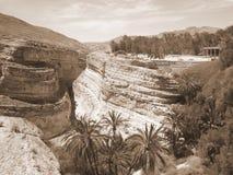 Красивые деревья en утесов на юге  Туниса стоковые изображения