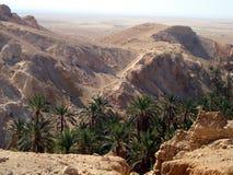 Красивые деревья en утесов на юге  Туниса стоковое фото