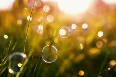 Красивые естественные с пузырями луга и мыла зеленого цвета ясности лета ярко shimmer и лежат на оранжевой предпосылке захода сол стоковое изображение