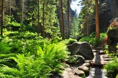 Красивые лес & природа стоковое фото rf