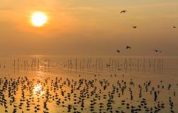 Красивые летать, посадка и положение чайок на заболоченном месте с Стоковое Изображение