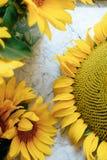 Красивые желтые солнцецветы на светлой предпосылке 1 стоковое изображение