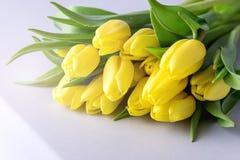 Красивые желтые тюльпаны на тонизированных цветках весны белого деревянного космоса полисмена предпосылки красивых Стоковое Изображение RF