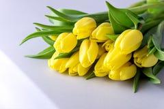 Красивые желтые тюльпаны на цветках весны белого деревянного космоса полисмена предпосылки красивых Стоковые Фото