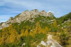 Красивые желтые цвета леса осени в горах Стоковое фото RF