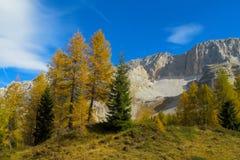 Красивые желтые цвета леса осени в горах Стоковые Фотографии RF