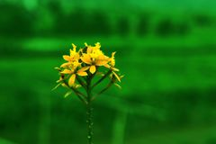 красивые желтые цветки в естественном зеленом цвете стоковые изображения