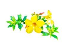 Красивые желтые цветки при зеленые изолированные лист стоковые изображения