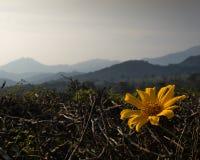 Красивые желтые цветки с lanscape гор как предпосылка стоковые фотографии rf
