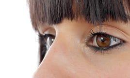 Красивые женские коричневые глаза закрывают вверх Стоковые Фотографии RF