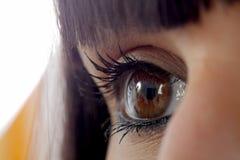 Красивые женские коричневые глаза закрывают вверх Стоковое Изображение RF